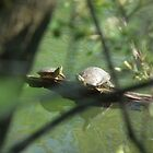 I Spy Two Turtles by Deb Fedeler