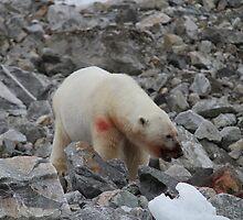 Bloody Polar Bear by Aaron Paul Stanley