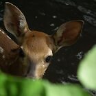 Peek-a-boo Fawn in Creek by Deb Fedeler