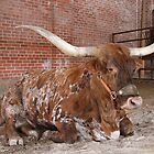 Bull Fort Worth Stockyards by Aaron Paul Stanley