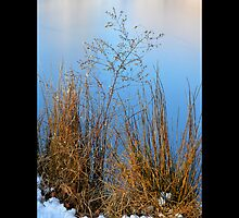 Dry Grass By Frozen Bartlett Pond  by © Sophie W. Smith
