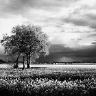 Rapeseed field with tree group by Harald Walker