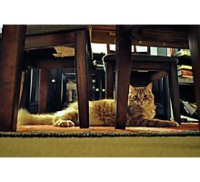 Resting Tabby Cat Photographic Print