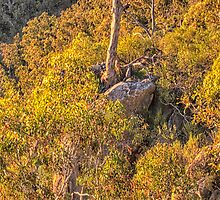 Stand Alone -  Bungonia Conservation Area - Goulburn NSW  - The HDR Experience by Philip Johnson