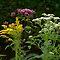 WILD FLOWERS of APPALACHIA CHALLENGE