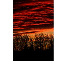 sunset over bare trees  Photographic Print