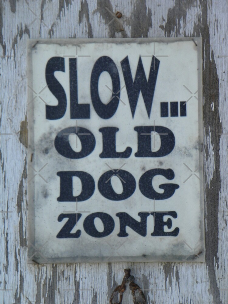 Slow - Old Dog Zone by Betty  Town Duncan