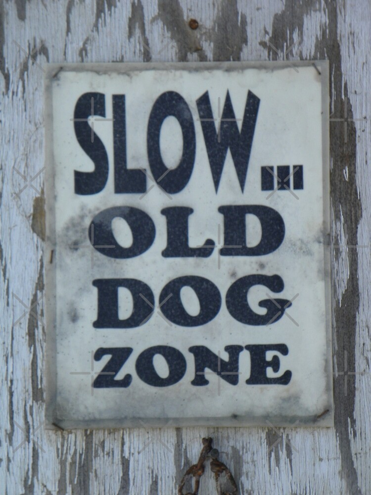 Slow - Old Dog Zone by BettyEDuncan