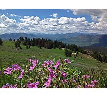 Alpine Blooms Photographic Print