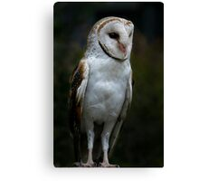 Wise Guy Canvas Print