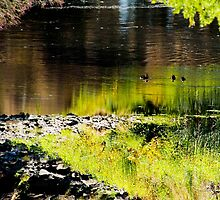 Dights Falls 4 by Leonie Morris