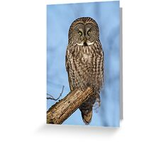 Great Gray Owl in Afternoon Light Greeting Card