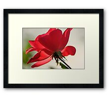 December 9th Rose Framed Print