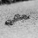 The Predator Lies In Wait by Eric Scott Birdwhistell
