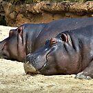 Sleepy Hippos by Steven  Agius