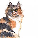Calico Maine Coon by Danelle Malan