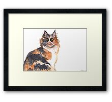 Calico Maine Coon Framed Print