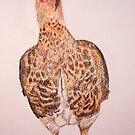 Chicken by Colin Shepherd