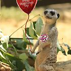 Meerkat Valentine by Larry3