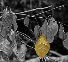 OneYellow Leaf by Deborah V Townsend