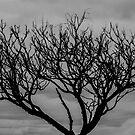 Lone Tree by rickstar228