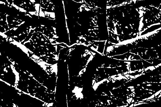 Winter Oak by John Thurgood