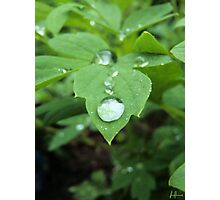 Water on leaf  Photographic Print