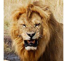 Portrait of a Lion Photographic Print
