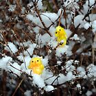 Chicks on Snowy Shrub by Humperdink