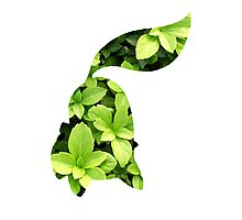 Chikorita used Razor Leaf Photographic Print