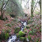 Winter stream by Daniel  Taylor