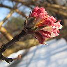First Signs of Spring by orko
