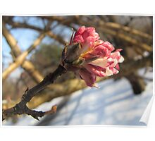First Signs of Spring Poster