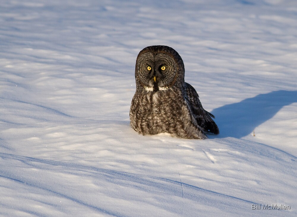 Dark Faced Beauty in the Snow by Bill McMullen