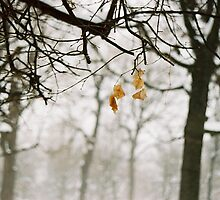 Winter 4 by andrea-ioana