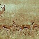 Antilopes in Serengeti National Park by Alina Uritskaya