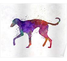 Polish Greyhound in watercolor Poster