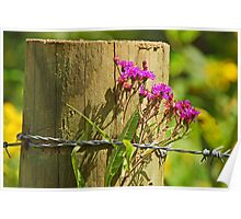 Behind The Fence Poster