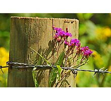 Behind The Fence Photographic Print