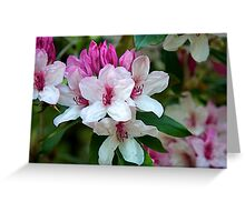 pink and white azalea  Greeting Card