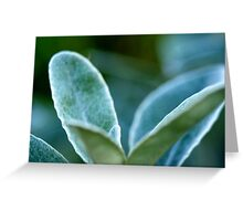 faded softness Greeting Card