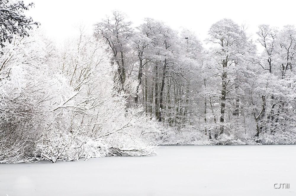 Frozen Tree  by CJTill
