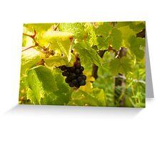 pinot noir grapes  Greeting Card