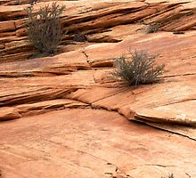 rocks and plants by thvisions