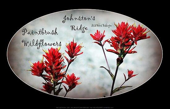 paintbrush wildflowers, Johnston's Ridge 3, oval by Dawna Morton