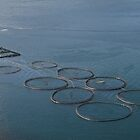 Ethical fish farm Faroe Isles, Denmark by Grace Johnson
