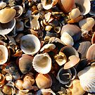 Shells by Harald Walker