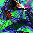 umbrellas blue and purple by thvisions
