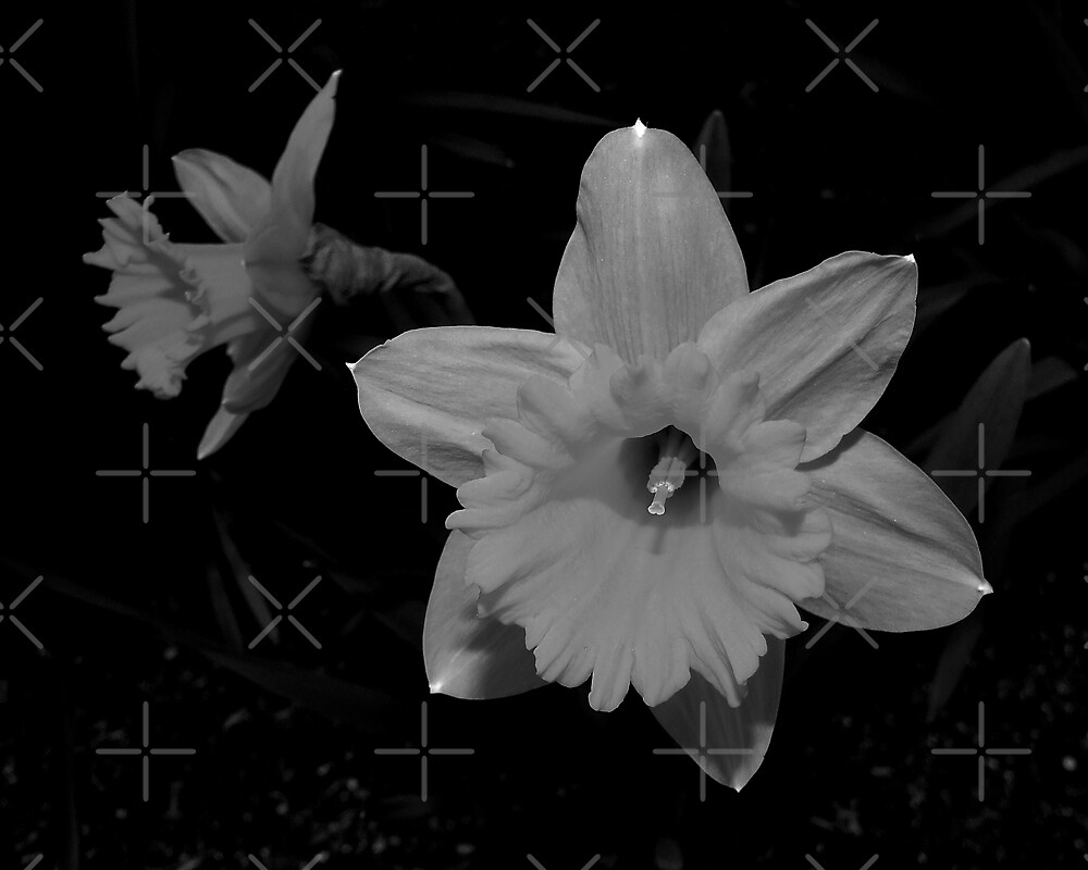 Daffodils In Black And White by BavosiPhotoArt