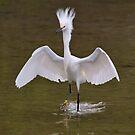 Snowy Egret by SuddenJim